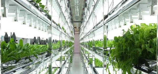 hydroponic-systems هیدروپونیک حال و آینده