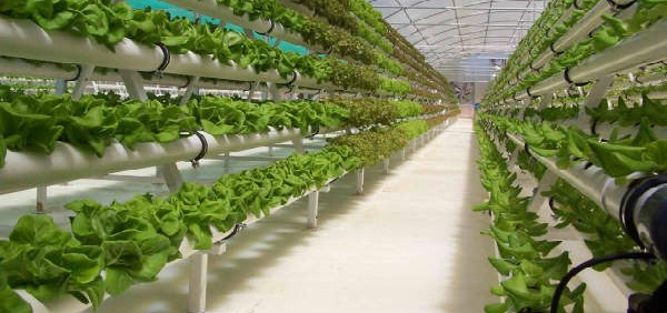 hydroponics-closed-loop-food-production-system مکان و فواید کشت هیدروپونیک
