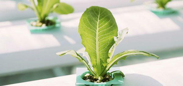 what-are-best-nutrients-growing ناخالصی کود در محلول غذایی