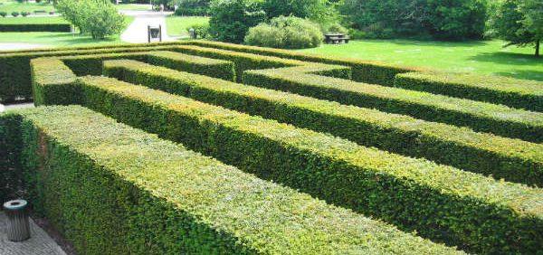 yew-hedge-maze پرچین و حاشیه در ریل تایم