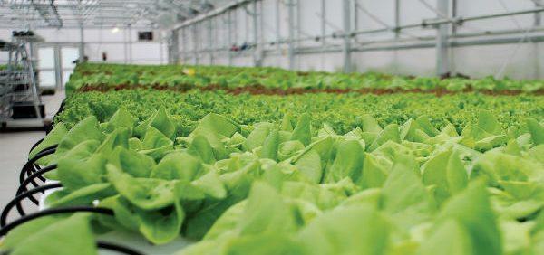 تنظیم شرایط محیطی در گلخانه