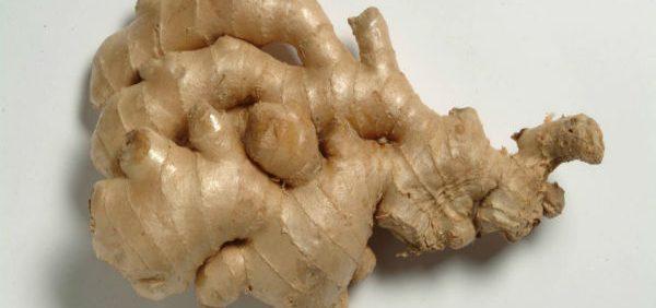 Zingiber زنجبیل گیاه دارویی برای درمان حالت تهوع