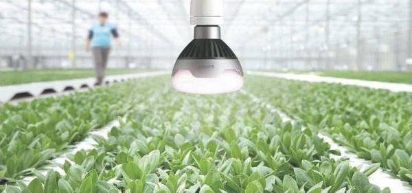 greenhouse نور در کشت گلخانه