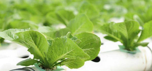 nutrient solution hydroponic preperation آماده سازی محلول غذایی کشت هیدروپونیک