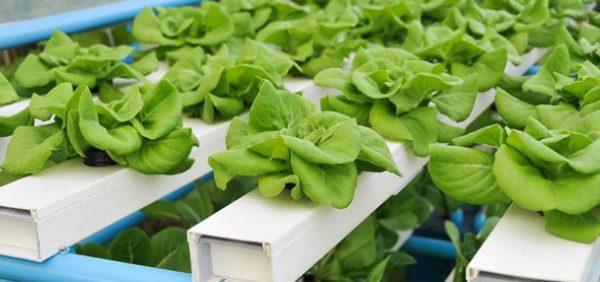 تغييرات محلول غذایی و مكانیسم گياهان