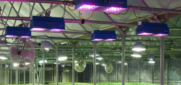 LED_Lights_in_Basil_Greenhouse مشخصههای نور مؤثر در رشد و نمو گیاهان